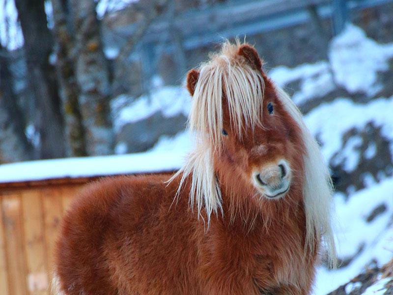 [Translate to en:] Pony